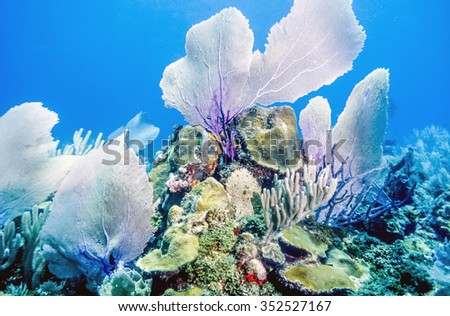 Coral reef with sea fans off the coast of Bonaire - stock photo