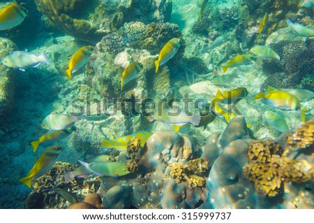 coral reef with shoal of french grunt fish and hard corals at Koh tao, Thailand - stock photo
