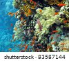 coral reef with shoal of  orange fishes - stock photo