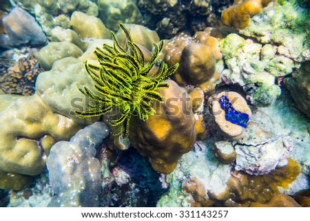 Coral reef yellow black underwater - stock photo