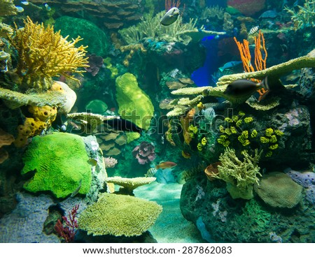 Coral reefs are underwater structures made from calcium carbonate secreted by corals. Coral reefs are colonies of tiny animals found in marine waters that contain few nutrients. - stock photo