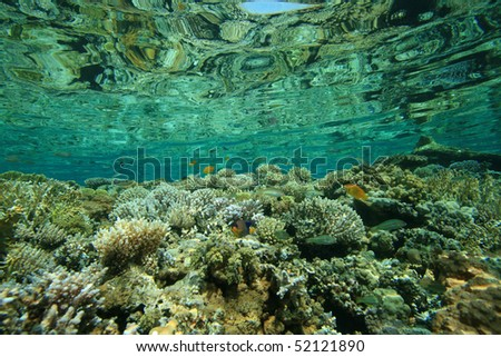 Coral Reflections - stock photo