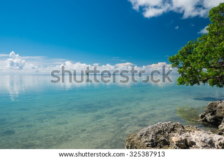 Coral rocks and Mangrove trees along the shallows of the crystal clear waters of the Florida Keys - stock photo