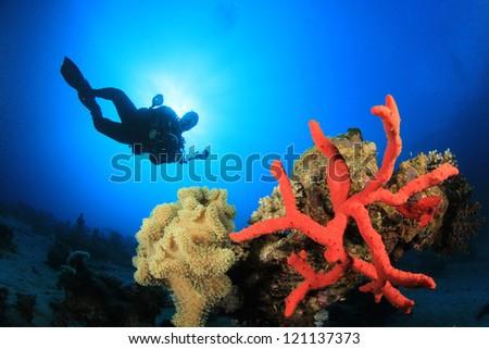 Coral, Sponge, Scuba Diver - stock photo