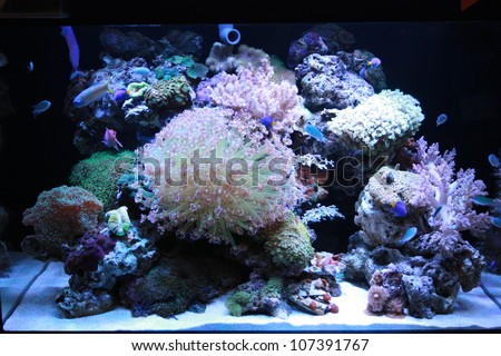 Coral tank - stock photo
