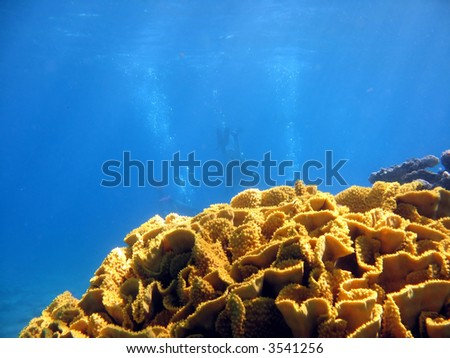 Coral with 3 divers in background. shot in the Red Sea - stock photo