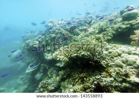 coral with fishes - stock photo
