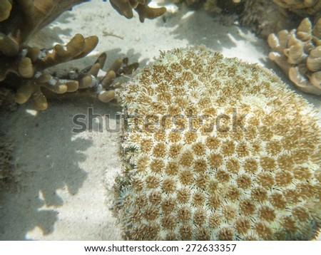 Corals - stock photo