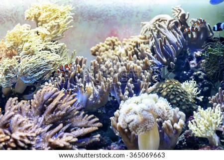 Corals and fishes in aquarium - stock photo