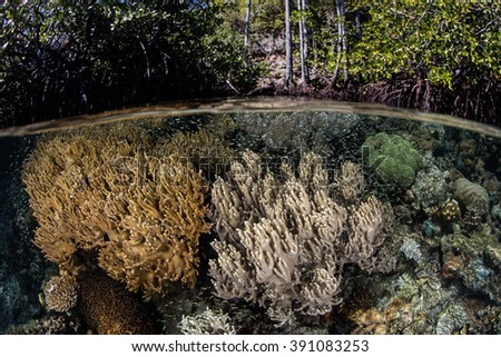 Corals and other marine invertebrates grow in abundance along the edge of a mangrove forest in Raja Ampat, Indonesia. This remote region harbors a diverse array of marine habitats and species. - stock photo