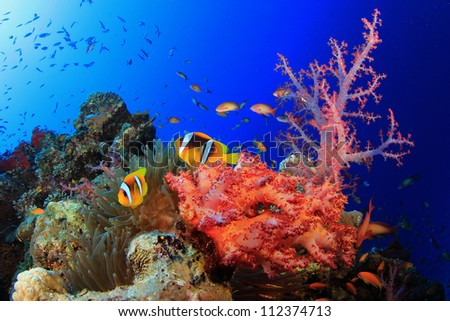 Corals, Anemone and Clownfish in Red Sea, Egypt - stock photo