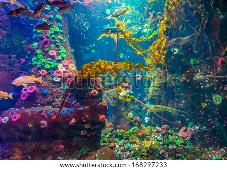 Corals, fish and algae, seaweeds. - stock photo