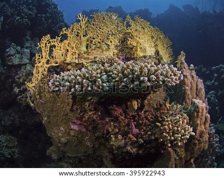 Corals of the Red Sea  - stock photo