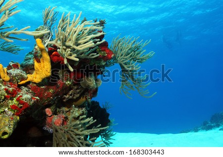 Corals on White Sand with Surfacing Divers in the Background, Cozumel, Mexico - stock photo