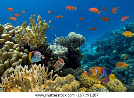 Corals reef. - stock photo
