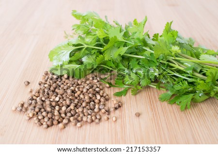 Coriander Leaves And Seeds - Cilantro - Fresh coriander leaves and dried seeds - stock photo