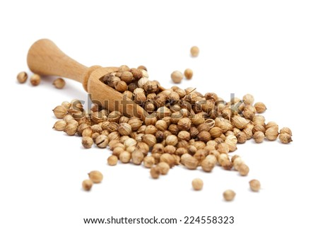 coriander seeds in a wooden spoon - stock photo