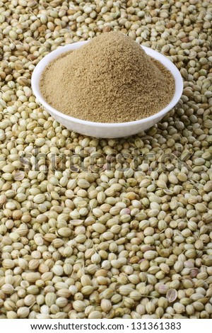 coriander seeds with coriander powder. - stock photo