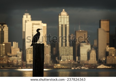 Cormorant Silhouetted on Seattle Skyline. A cormorant bird on a piling is silhouetted against a skyscraper during a beautiful Seattle sunset seen from West Seattle. - stock photo