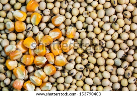 Corn and soybeans. - stock photo