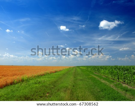 corn and wheat field against blue sky - stock photo
