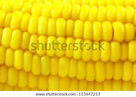 corn background, Macro closeup for design work - stock photo