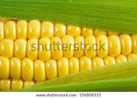 corn cob - stock photo