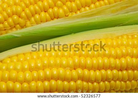 corn cob background - stock photo