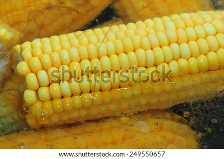 Corn cobs boiling in hot water - stock photo