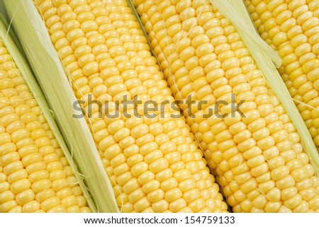 Corn cobs with green leaves - stock photo