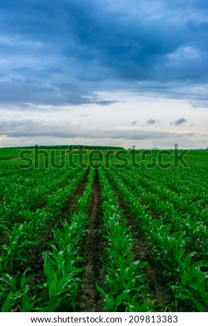 Corn field with clouds - stock photo