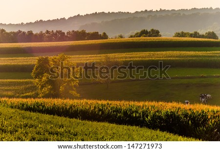 Corn fields and hills in rural York County, Pennsylvania. - stock photo