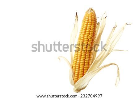 Corn for animal feed wonderful on white background. - stock photo