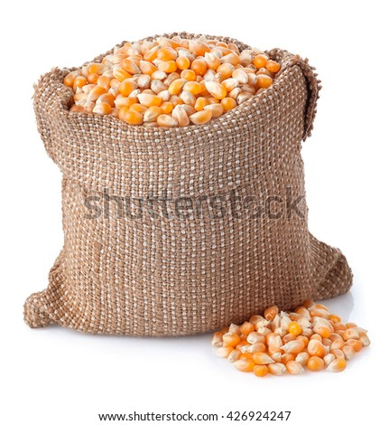 corn grains in bag isolated on white background. Corn seeds in sack. Dry uncooked corn grains for popcorn - stock photo