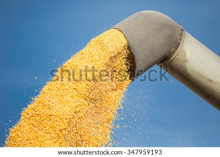 Corn harvest in autumn. Loading of grain of corn in the car from a combine in the field. - stock photo