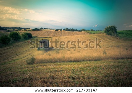 corn harvesting by combine harvester. - stock photo