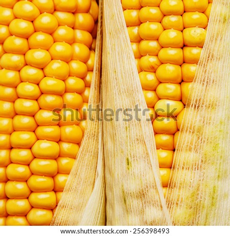 corn in a detail - stock photo