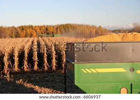 corn in hopper - stock photo