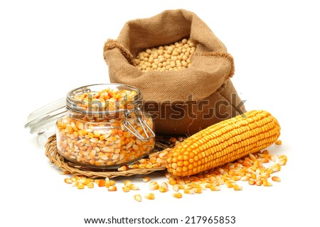 corn on white background  - stock photo