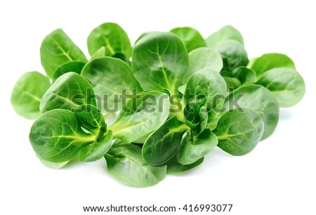 Corn salad,lamb's lettuce isolated on white  - stock photo