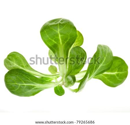 corn salad leaves isolated - stock photo