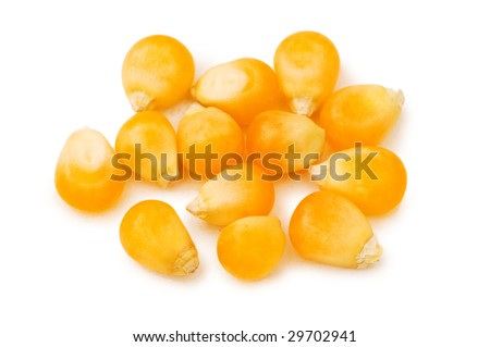 Corn seeds isolated on the white background - stock photo