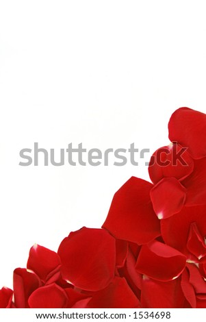 corner frame from scattered loose red rose petals - stock photo