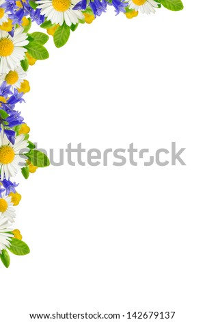 Corner with wild flowers on the white background - stock photo