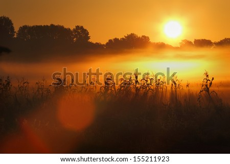 Cornfield Fog Sunrise. Sunrise over a cornfield as a foggy mist rises over the field.  - stock photo