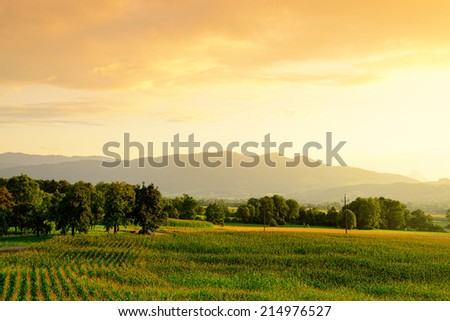 cornfield in the evening, Austria - stock photo