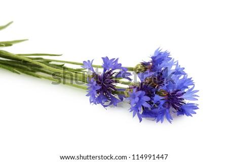 cornflowers isolated on white - stock photo