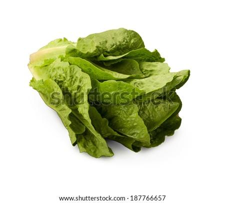 Cos Lettuce - stock photo