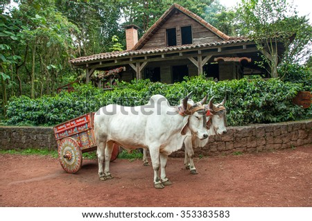 Costa Rican Ox towing a traditional cart - stock photo