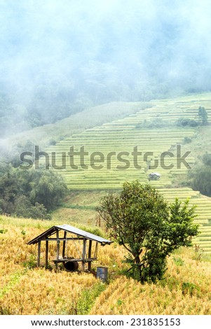 Cottage at a cornfield - stock photo